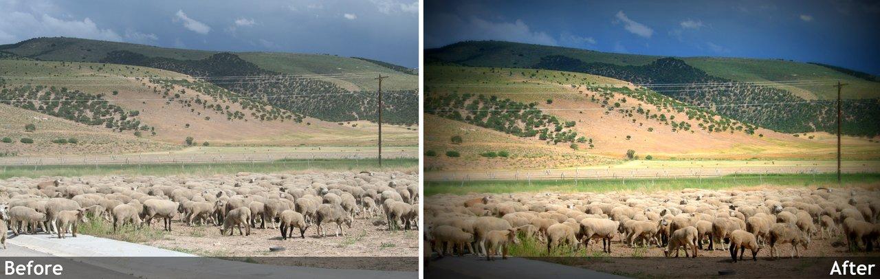 Wordful Wednesday-Herding Sheep