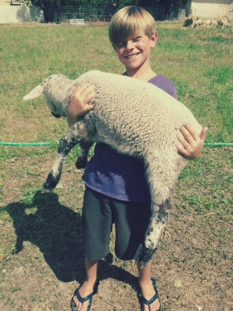 garrett with lamb