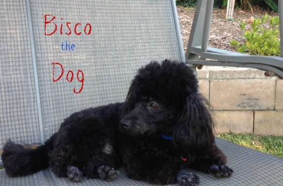 bisco the dog