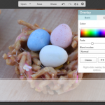 PicMonkey Tutorial:  How to Add a Transparent Overlay to Your Image